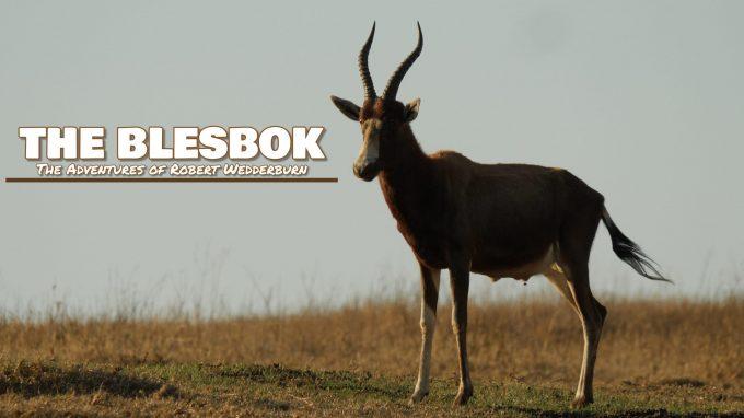 The Blesbok (Damaliscus pygargus phillipsi)